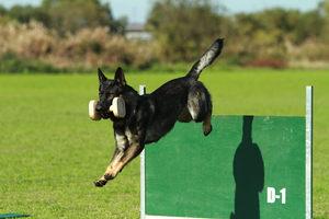 訓練犬育成コースの様子